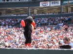 The Orioles Bird at a game at Camden Yards