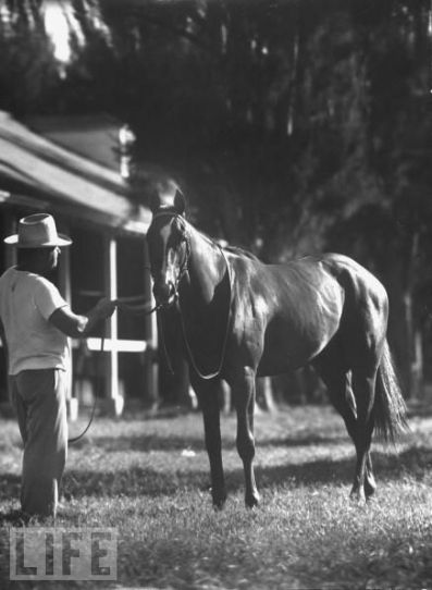 Uncle Miltie - from a LIFE magazine photo shoot. This was the horse that brought my father-in-law and mother-in-law together at JC Farms - now Christian Brothers Academy