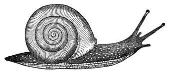 Snail (Algonquin Books)