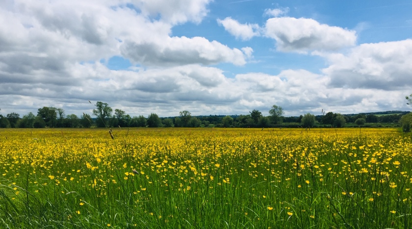 Rambling through the Cotswold countryside