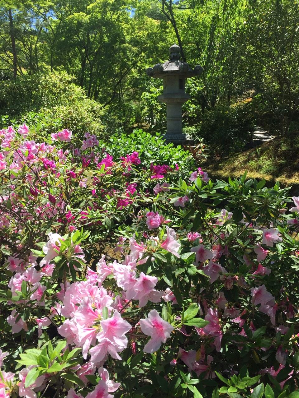 Golden Pavilion garden