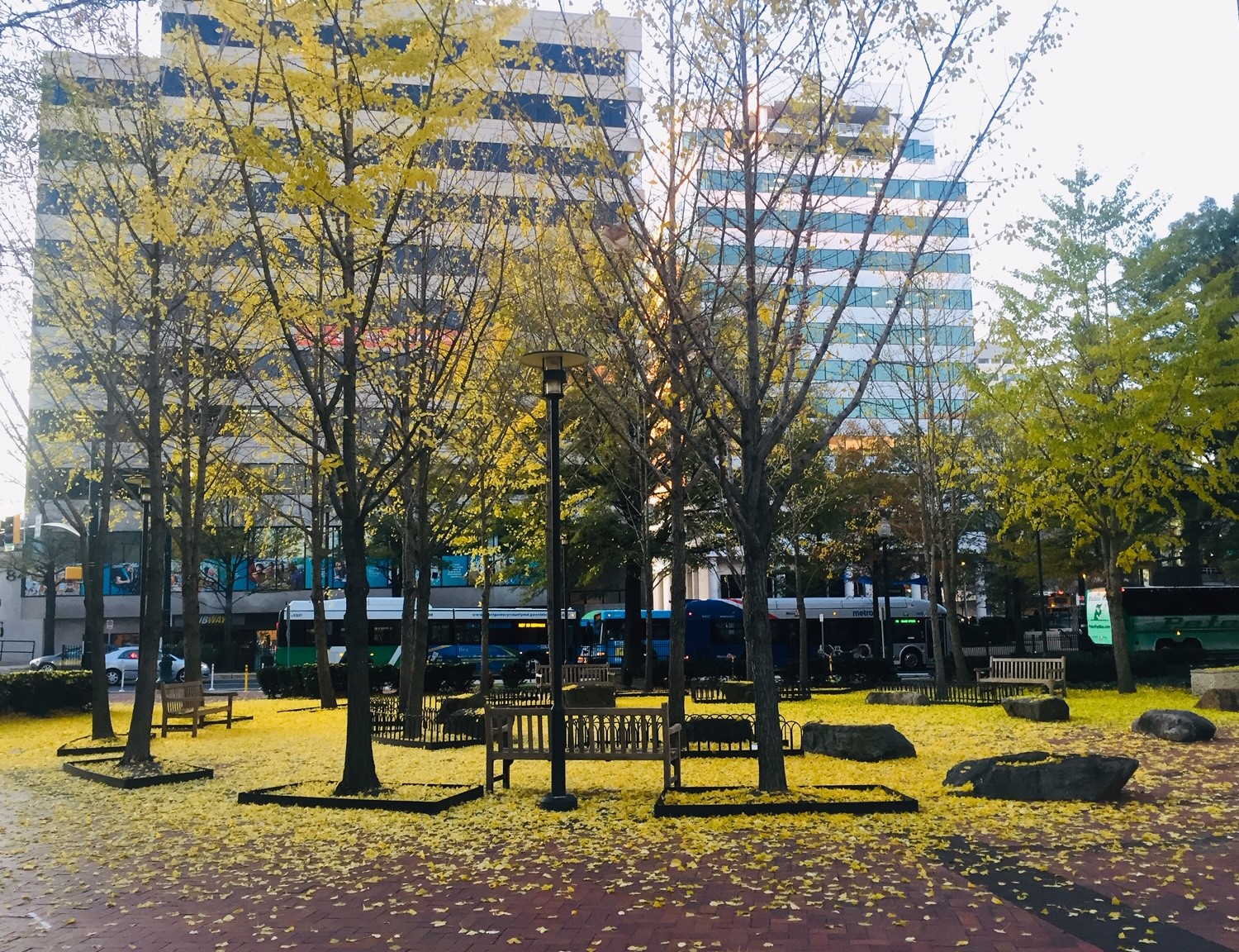 Fall in downtown Silver Spring
